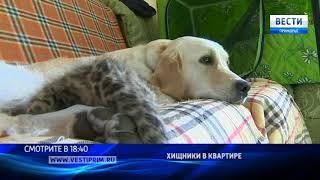 «Вести: Приморье»: Зоопарк в квартире: маленькая львица, котята леопарда и все-все-все