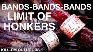 NY Goose Hunt (BANDS-BANDS-BANDS)