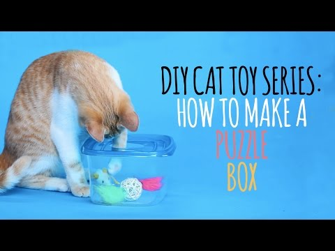 Thumbnail for Cat Video DIY Cat Toys - How to Make a Puzzle Box