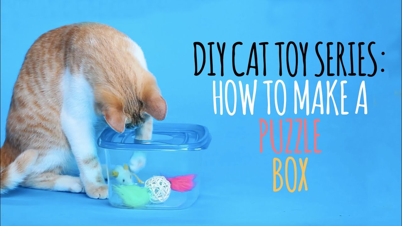 Diy cat toys how to make a puzzle box funnycat tv for How to make a cat toy out of a box