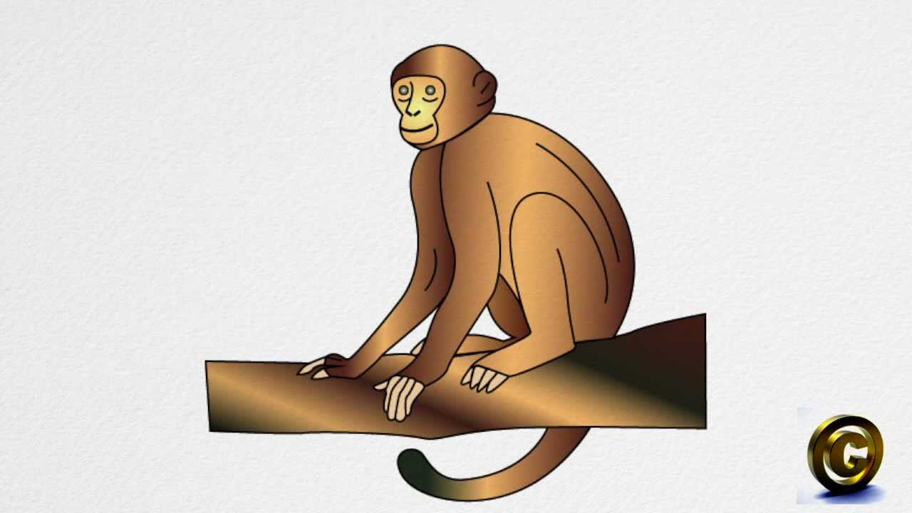 how to draw a monkey step by step youtube