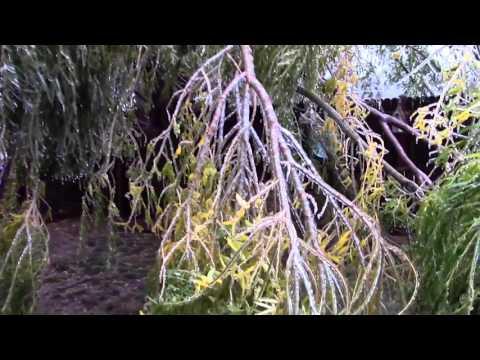 Tree Care Workshop: Seasonal Environmental Issues