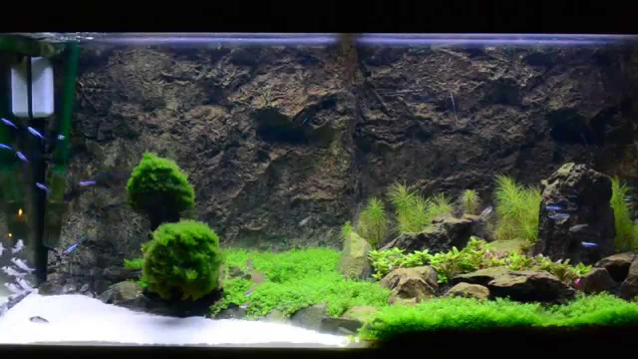 Pas opgestart zoetwater aquarium   YouTube