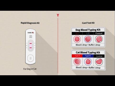 Feline AB Blood Typing Rapid Kit