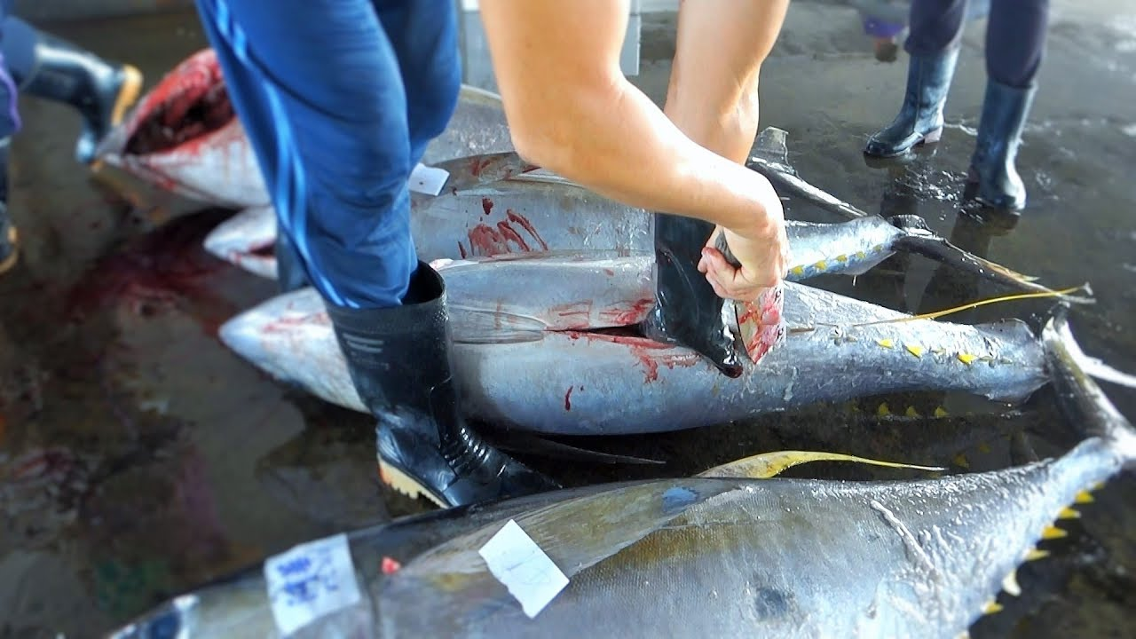 All kinds of YellowFin Tuna Cutting And Filleting