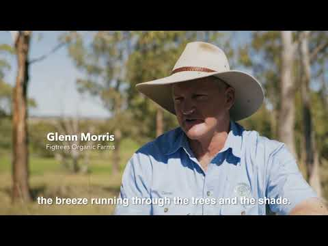 Glenn Morris, Fig Tree Organic Farm   IGA Supplier [CC]