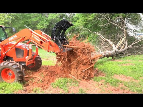 Tractor & Grapple Pecan Tree Cleanup!
