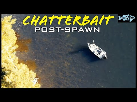 4 Tips For Post-Spawn Bass Fishing Weedless ChatterBaits