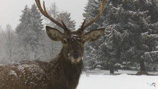 Exclusiv în România: Cel mai mare parc natural de animale din ţară (@TVR1)