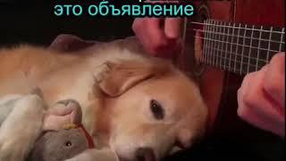 Предал собаку.. 😔