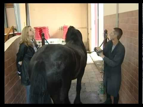 Как ухаживают за лошадьми видео