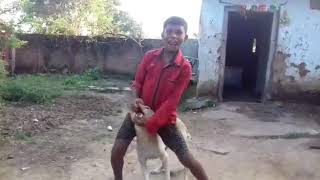 Funny dance with dog