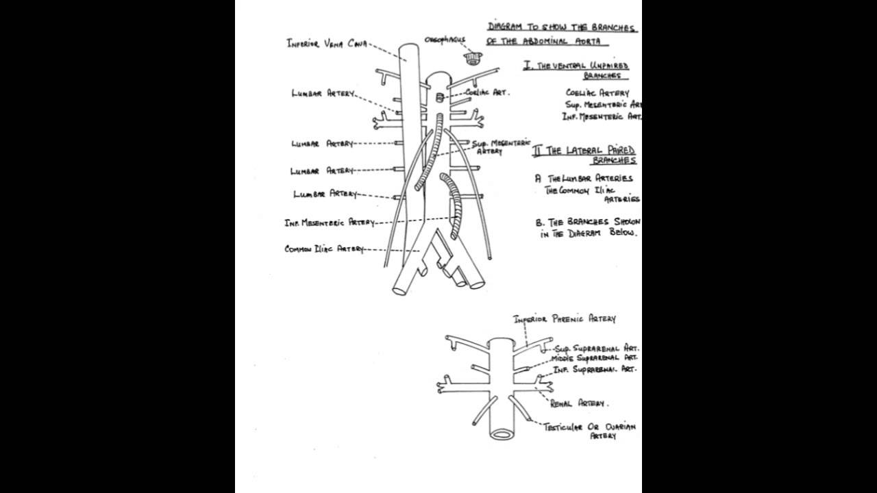 Upper Gastrointestinal Tract Anatomy- 2 Min Anatomy Refresher - YouTube