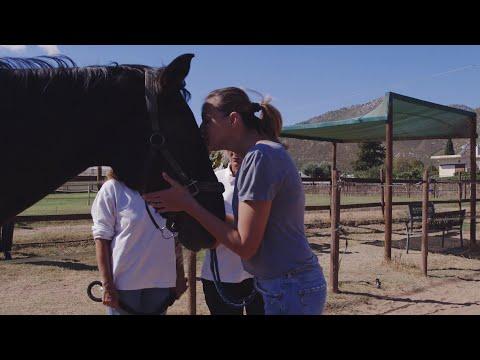 Ψυχοθεραπεία με άλογα