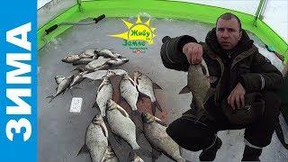 Нужна ли прикормка на зимней рыбалке - или всегда можно обойтись мотылем.
