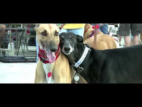 adopting the racing greyhound pdf