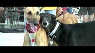 Adopting a Greyhound - Friends of Greyhounds