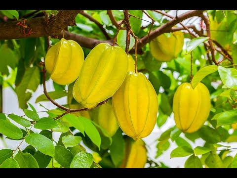 This Miracle Fruit Controls Diabetes, Lowers Cholesterol and Fight Infla...