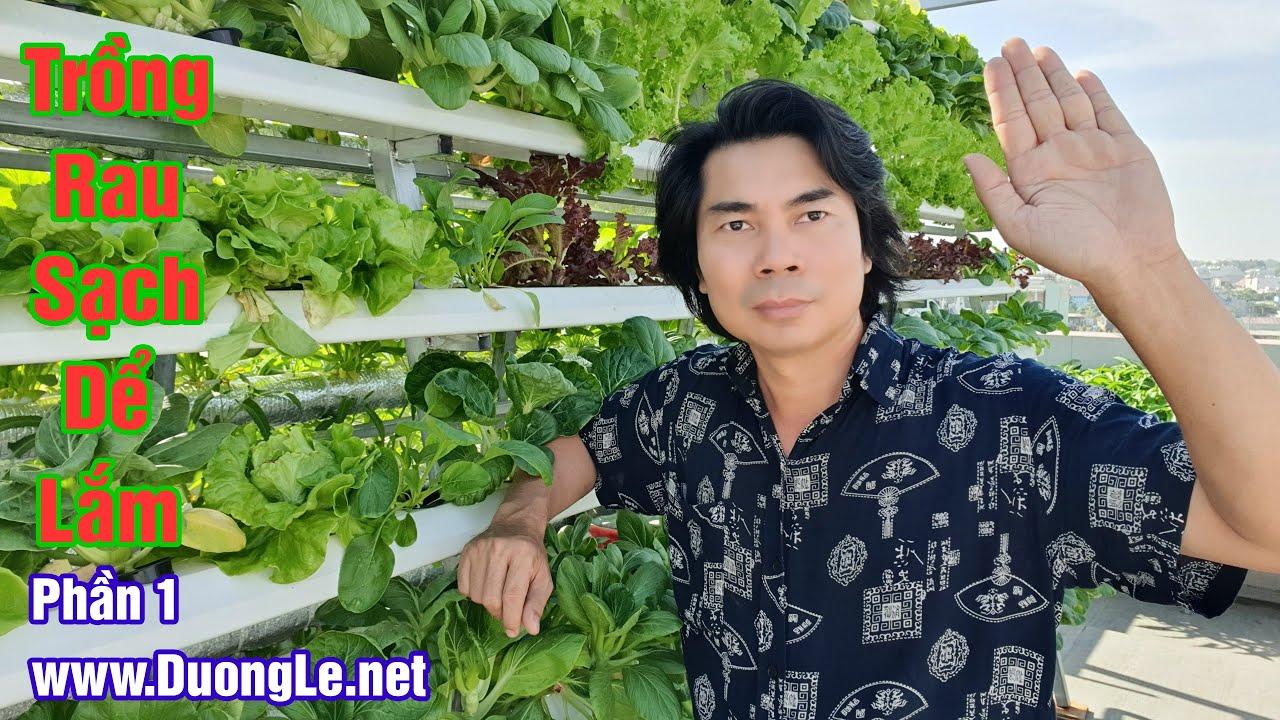 Hướng dẫn trồng rau sạch thủy canh và thu hoạch cực dễ – Phần 1  Dương Lễ