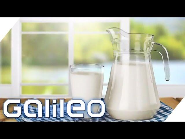 So billig wie nie zuvor: Milchpreis im freien Fall | Galileo Lunch Break