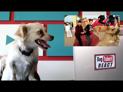 DogTubers React- Lindsey Stirling