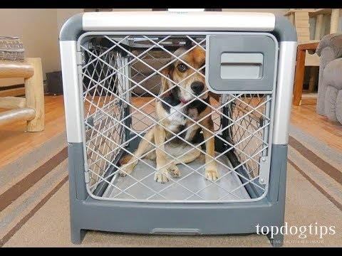 Revol Dog Crate By Diggs Review And Testing