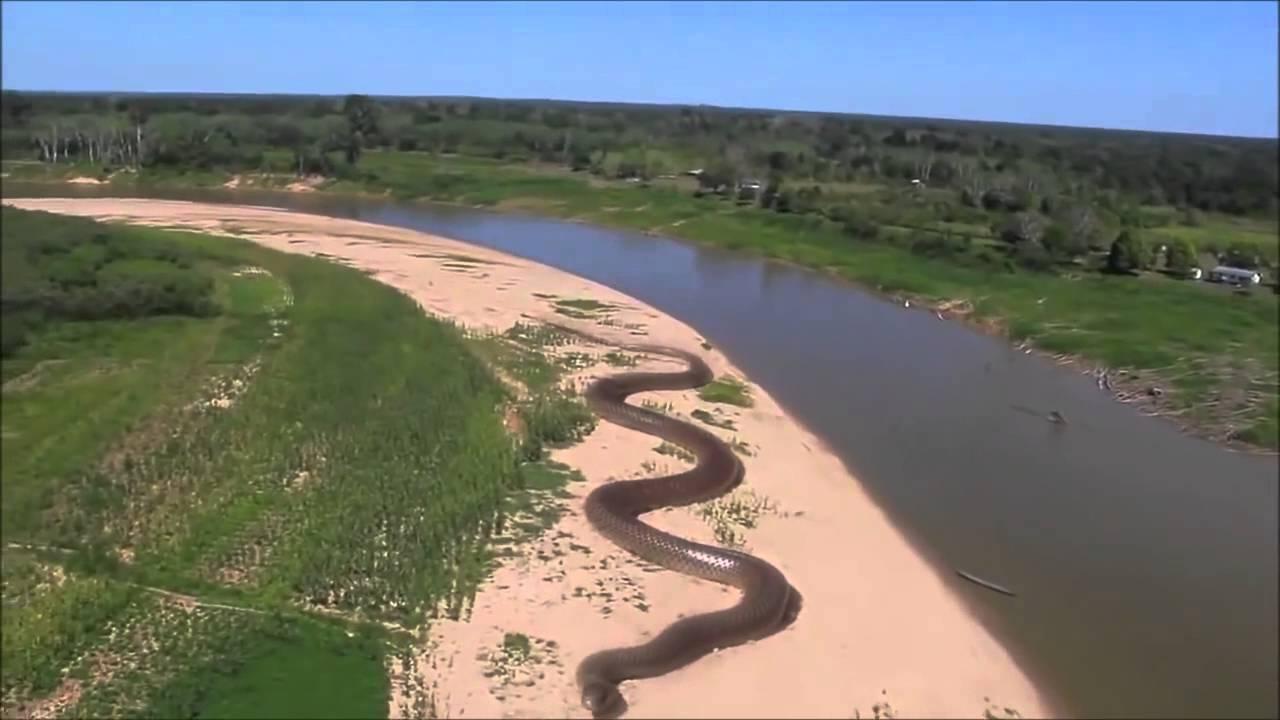 Monster snake found