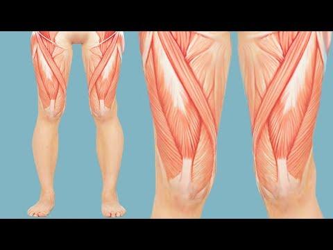 Латеральная мышца бедра болит