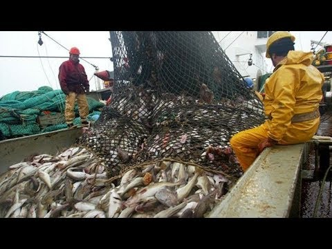 The Most Satisfying Big Catch Fishing In The Deep Sea With Net
