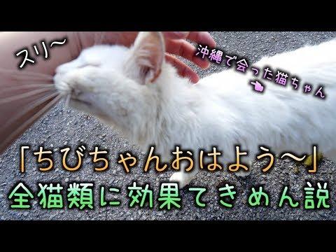 沖縄で出会った野良猫に'ちびちゃんおはよう'を言ったら懐いてきた!!