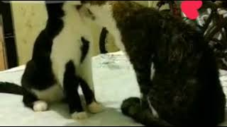 #cats #cat #love #night # 🐈 #любовь #эротика #eroticism #kiss #affection #нежность