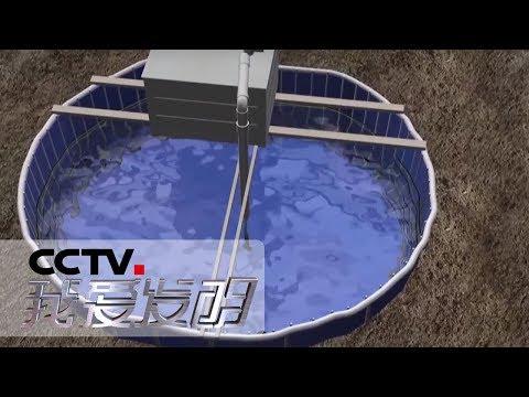 《我爱发明》 布袋养虾记:室内养虾设备 绿色环保养殖模式 20190528 | CCTV科教