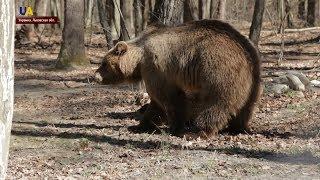 Во львовском приюте для животных появилась новая жительница - медведица Ласка
