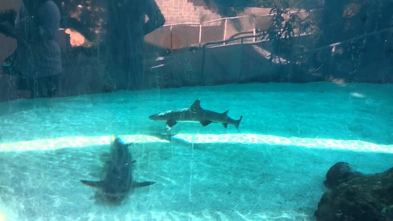 Sharkslagoon