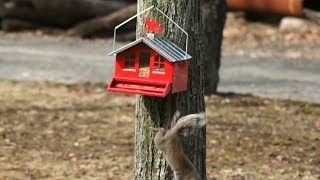 New! - Squirrel-proof Bird Feeder Vs. Squirrel