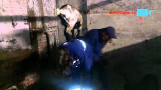Koza akrobat