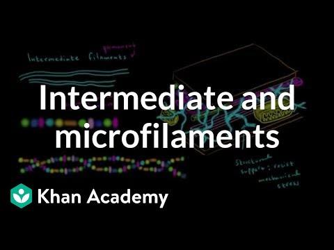 Microfilaments and intermediate filaments   Cells   MCAT   Khan Academy