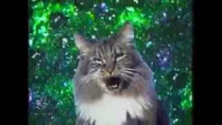 поющие коты прикол