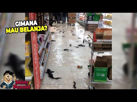 Image of Kalo Gak Direkam Gak Bakal Ada yang Percaya, Ikan Berenang di Supermarket