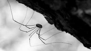 Почему нельзя убивать пауков? Что может случиться?