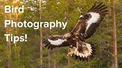 How To Photograph Birds In Flight - GREAT tips from Jari Peltomäki