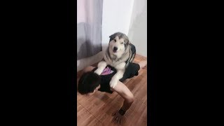 [2019] Funny videos of cute dogs and cats 196