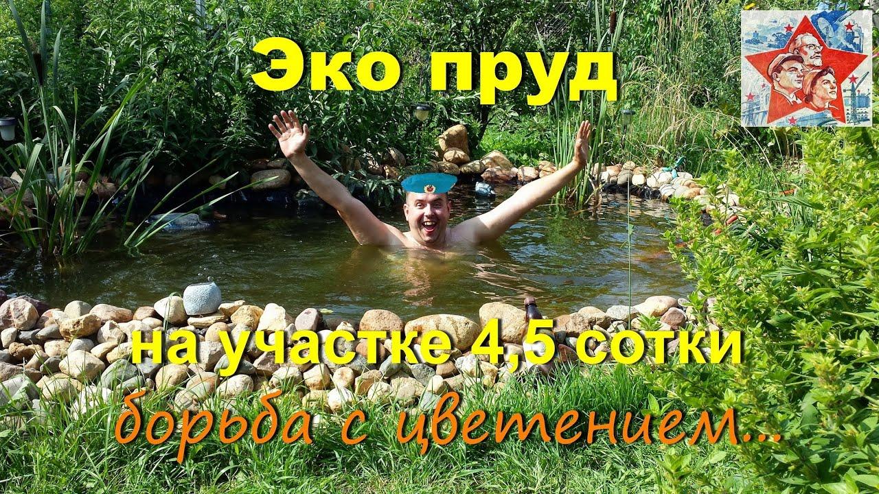 Борьба с цветением пруда. Эко пруд своими руками на участке 4,5 сотки.