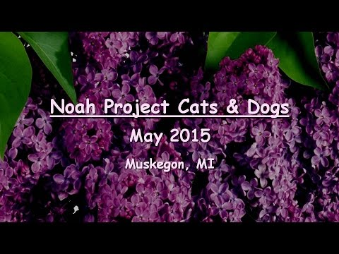noah project muskegon mi Noah project is one of 6 animal shelters in muskegon, mi 49444 find phone, map, directions, website, coupons, reviews, hours.