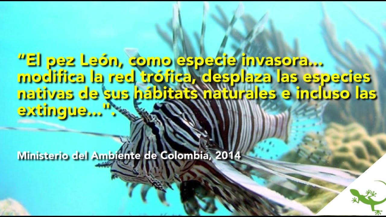 d477d4cfb98 control de plaga pez león en Caribe colombiano