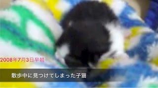 猫なんか呼ばなくてもやって来る。。。ただし出会いは運命的なものだと思う。生まれて間もない頃に保護した子猫に教えてもらったよ!!! 名前は...