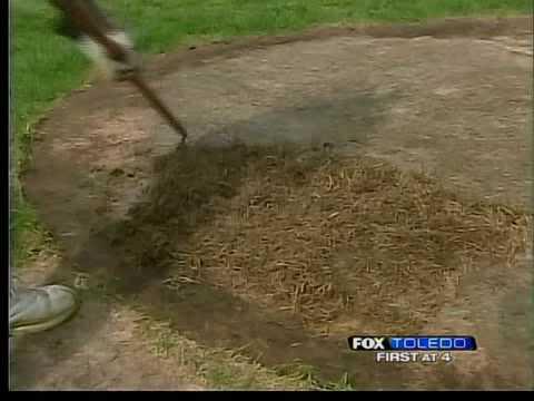 Revitalizing dead grass