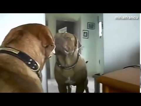 Funny Dogs Barking And Growling