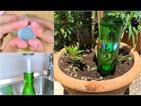 acqua piante bottiglia rovesciata