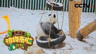 [正大综艺·动物来啦]雪融化后大熊猫通常做的第一件事是什么| CCTV